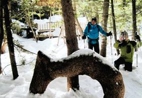 新雪に埋もれた「ネジネジの木」