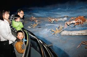 海底でのズワイガニの生態を紹介するコーナー=福井県越前町厨の「越前がにミュージアム」で