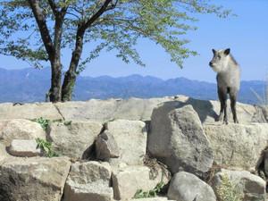 南アルプスの岩場を再現したカモシカ舎==飯田市の市立動物園で(飯田市提供)