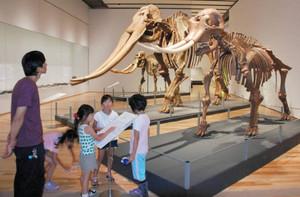 ミエゾウから進化したアケボノゾウや、古代の中国にいたコウガゾウなどの全身骨格標本が並んだ企画展=津市一身田上津部田の県総合博物館で