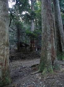 杉の大木に囲まれた義経堂(中央後方)。牛若丸と呼ばれていたころは、このあたりで剣術の修行をしていたという