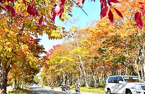 木々の葉が赤や黄色に色づいた街道を走る行楽客=高山市清見町で