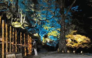 多彩なライトによって、闇夜の中に浮かび上がった渓谷内の木々=名張市赤目町長坂の赤目四十八滝で