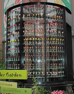 切り花500本を9段に飾るチューリップパレス=いずれも砺波市中村で