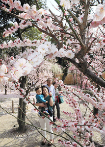 春本番の陽気の中、満開の梅園を散策する人たち=津市の結城神社で