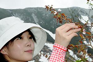 日本一遅い桜の花見=昨年