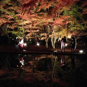 「逆さもみじ」曽木公園のライトアップ=昨年