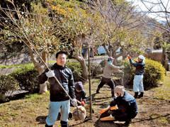 恋人岬に土肥桜を植樹する小下田青年会のメンバー=伊豆市小下田で