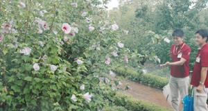 美しい花びらを広げるムクゲ=安城市のデンパークで