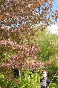 秋色に染まり始めた余野公園=伊賀市柘植町で