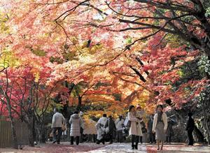 境内を鮮やかに彩る紅葉=東近江市の永源寺で