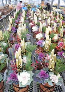 製作が佳境を迎えている正月飾りの鉢植え=蟹江町シルバー人材センターで