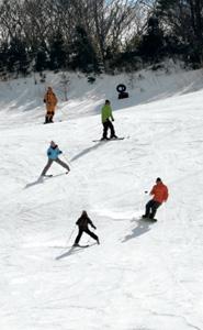 全コースが滑走可能となった茶臼山高原スキー場=豊根村坂宇場で