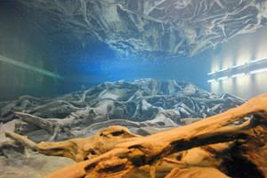 巨大な樹根が神秘的に見えるよう、照明を変えた埋没林の水中展示=博物館提供