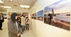 世界各地で撮影された愛らしいネコの姿が、来場者を楽しませる「岩合光昭写真展ねこ歩き」=いずれも金沢市の大和香林坊店で