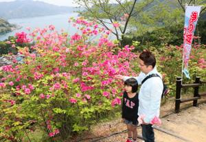 遊歩道を彩るオンツツジを眺める親子=尾鷲市曽根町の城山公園で