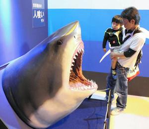 迫力あるホホジロザメの頭部を再現した模型=美浜町の南知多おもちゃ王国で