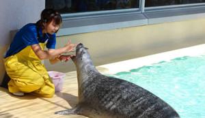 ゴマフアザラシの生態について解説する飼育員=魚津水族館で