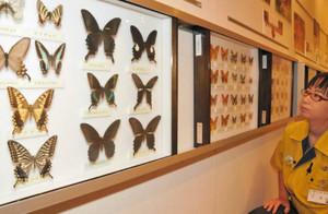県内で記録されたチョウの標本がずらりと並ぶ=県ふれあい昆虫館で