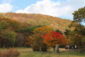 一足早く紅葉を迎え、彩り豊かな面ノ木原生林=豊田市稲武町で