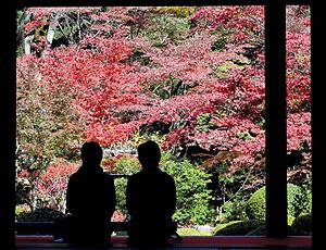 鮮やかに色づき、観光客の目を楽しませる紅葉=愛荘町の金剛輪寺で