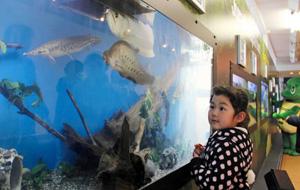 「生きている化石」と言われる生物を常設展示した新コーナー「ジュラチック アクアリウム」=坂井市の越前松島水族館で