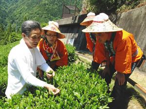 参加者が摘み方をお茶農家(左)に教わる昨年の様子=天龍村で
