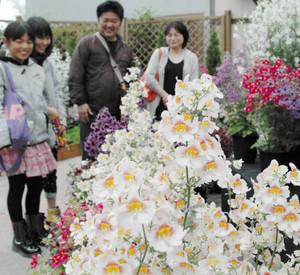 羽ばたくチョウのような花が美しいシザンサスを楽しむ家族連れ=安城市のデンパークで