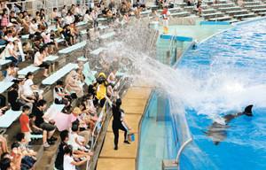 イルカが尾びれを振り、観客に水しぶきをかける海水シャワーのパフォーマンス=名古屋市港区の名古屋港水族館で