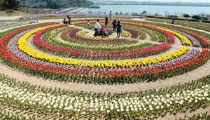 色鮮やかに咲き誇り来園者を楽しませるチューリップ=田原市野田町のサンテパルクたはらで