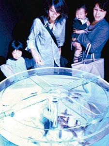 水槽のホタルイカをのぞき込む空港利用者=富山空港で