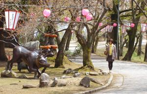 ぼんぼりやちょうちんが飾り付けられた峠道=津幡町の倶利伽羅峠で