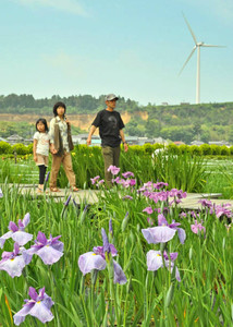 ハナショウブを観賞する来場者たち=あわら市の北潟湖畔花菖蒲園で