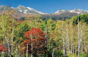 赤や黄色の色鮮やかな紅葉が見ごろを迎えた乗鞍高原=松本市安曇で(立石研さん提供)
