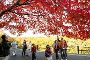 見ごろを迎えた紅葉を楽しむ参加者たち=長久手町の愛・地球博記念公園で