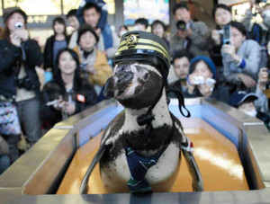 ペンギン駅長として改札口に立つ志摩ちゃん=志摩市の近鉄賢島駅で