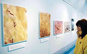魚津市内の自然を中心に紹介する「魚津ナチュラルギャラリー10」。左の写真2枚がコシンジュガヤ=魚津埋没林博物館で