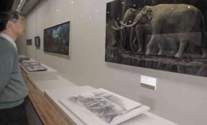 アケボノゾウの復元図などが並ぶ会場=草津市の県立琵琶湖博物館で