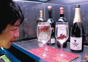 ワイングラスの中で泳ぐ淡水魚「ベタ」=各務原市川島笠田町のアクア・トトぎふで