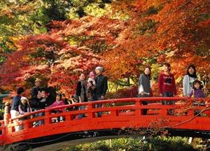 鮮やかな赤や黄色に染まり、紅葉の見ごろが始まった小国神社=21日午後、森町一宮で