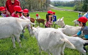 ヤギと触れ合う園児たち