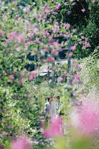 境内を埋め尽くし秋のたたずまいを感じさせるハギ=福井市の瑞源寺で