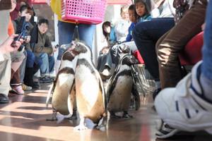 昨年初めて実施され、家族連れなどを楽しませたペンギン列車=近鉄志摩線で