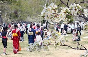スモモの花が咲く中、開山を祝った園遊会=松本市安曇の乗鞍高原一の瀬園地で