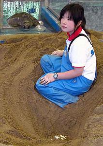 産んだ卵(下)を見守る母ガメ(奥)と大西由紀子さん=24日、坂井市の越前松島水族館で