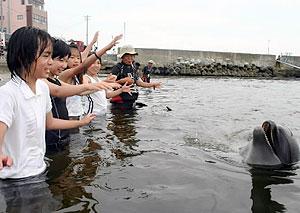イルカとの触れ合いを楽しむ子どもたち=南知多町日間賀島で