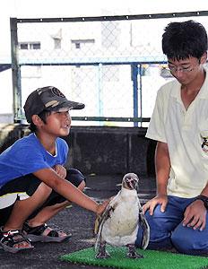 ペンギンの手触りを楽しむ子ども=志摩市阿児町賢島の志摩マリンランドで