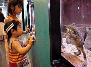 見る人を楽しませるマルメタピオカガエル=各務原市川島笹田町の世界淡水魚水族館アクア・トトぎふで