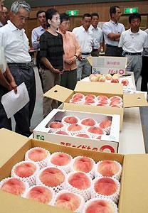 今年の桃の出来を確認する出席者=高山市冬頭町のJAひだ農業管理センターで