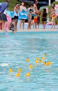 流水プールの中をゴール目指して泳ぐアヒルのおもちゃたち=志摩市の合歓の郷で